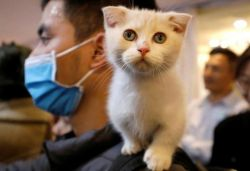 Cat found to be infected with coronavirus in Belgium