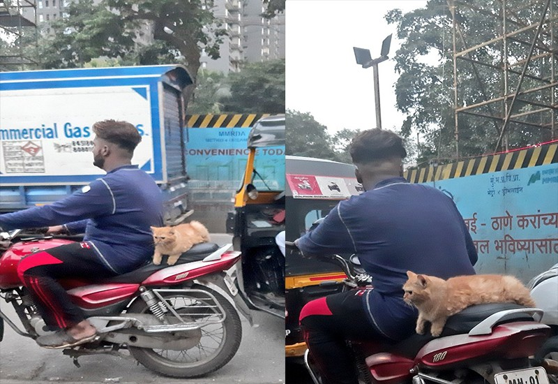 Cat rides pillion on bike, pictures intrigue Twitter