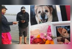 Indian man comes from New Zealand to immerse dog's ashes in Ganga