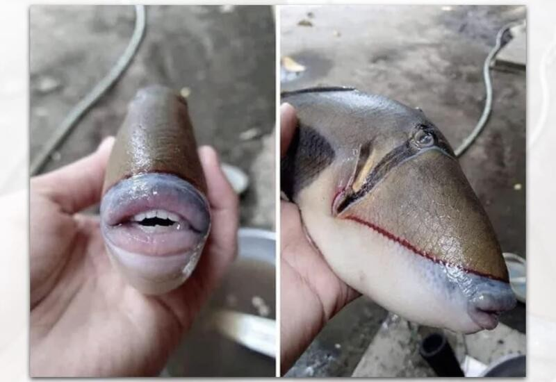 Fish with human-like teeth and lips spotted in Malaysia, pics go viral