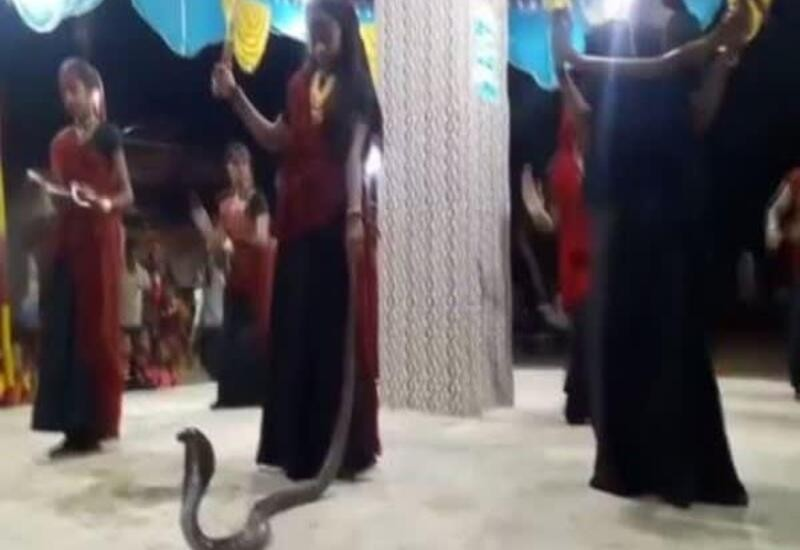 Women perform garba with snakes in Gujarat's Junagadh, five arrested