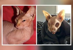 Pictures of hairless cat with no eyeballs go viral