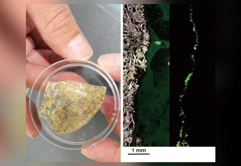 Scientists find microbes in deep-sea rocks, say life on Mars may be similar