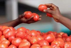 Tomato prices rise to ₹60-70/kg; Paswan says due to lean period